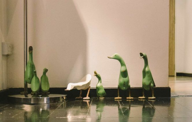 Oca Grassa = Fat Goose in Italian.